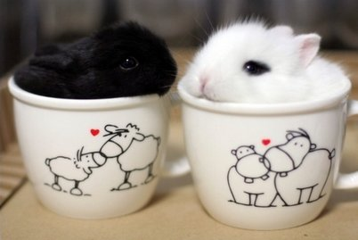 black-black-and-white-bunny-lil-little-Favim.com-281331