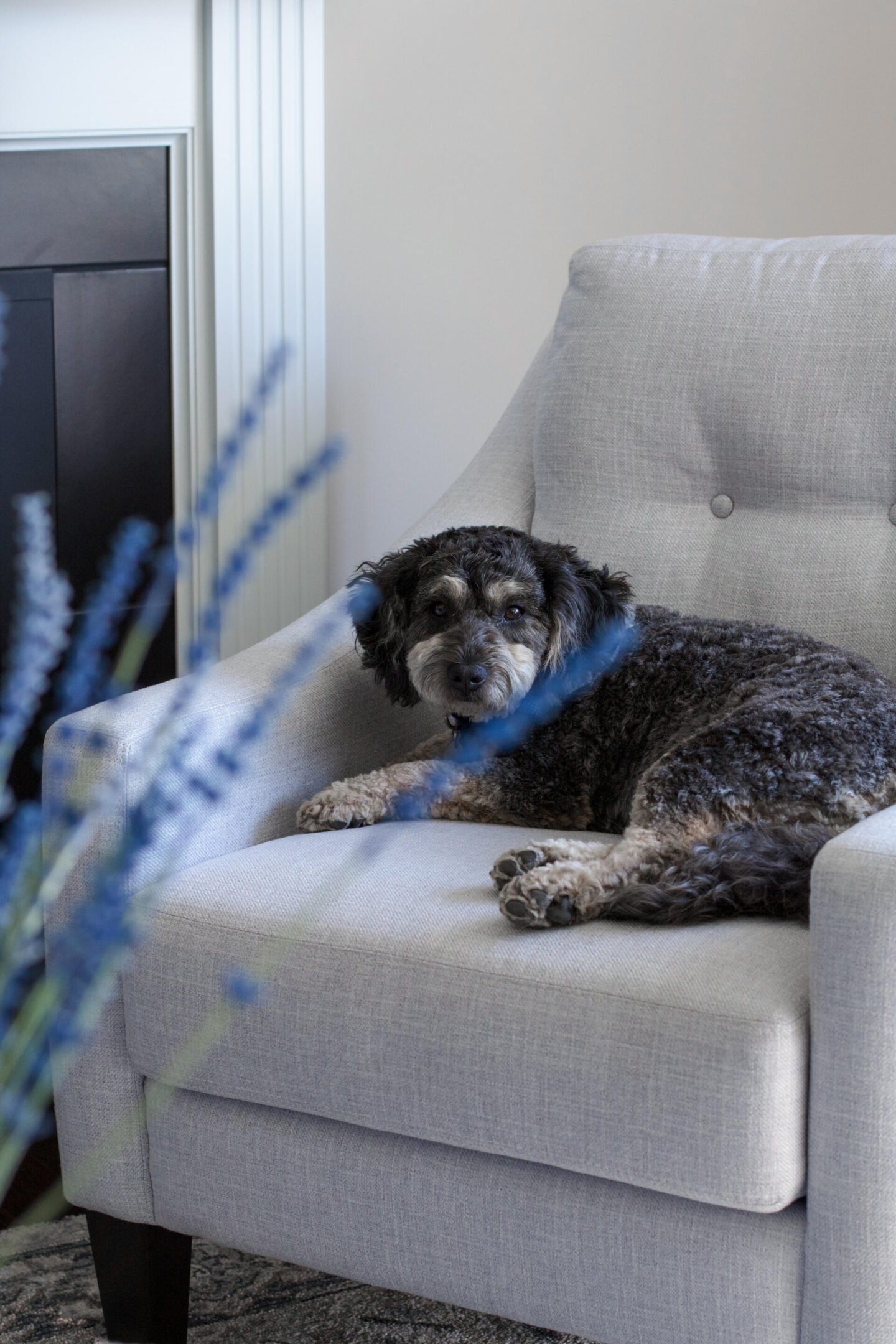 Reese sitting on Dufresne Claudia Chair